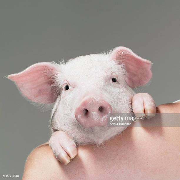 Pig looking over someone's shoulder
