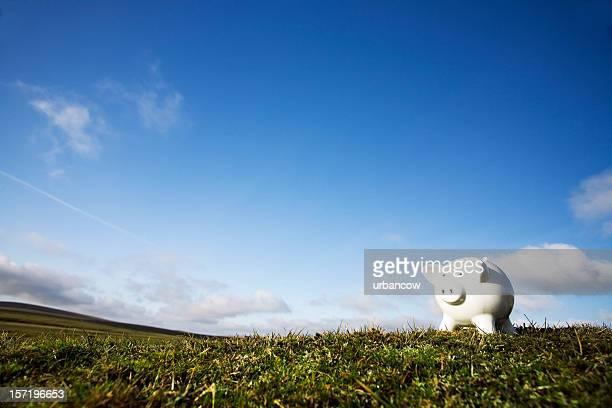 Schwein auf einem Hügel