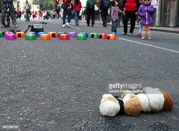 Pig Race On Street In City