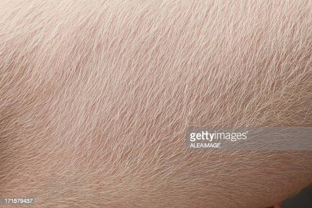 pig skin - pig stock pictures, royalty-free photos & images