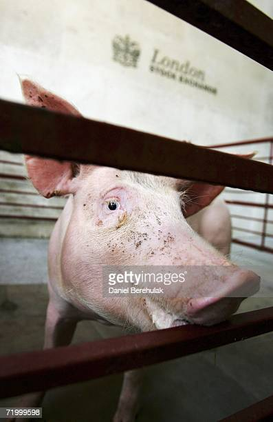 A pig stands in front of the London Stock Exchange on September 26 2006 in London England ETF Securities Ltd the world pioneer of Exchange Traded...