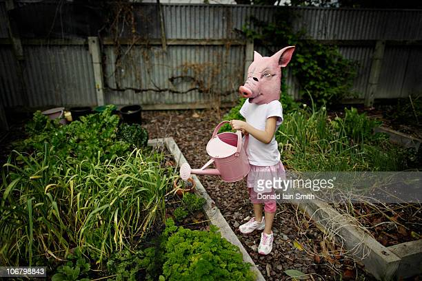 Pig with watering can