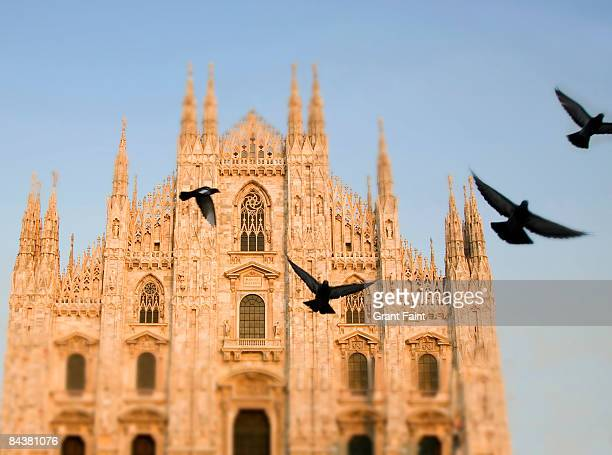 pigeon birds flying in front of church facades