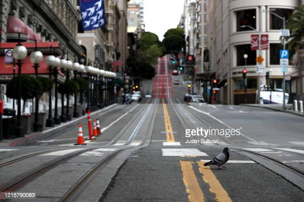A pigeon crosses an empty Powell Street during the coronavirus pandemic on March 30 2020 in San Francisco California Officials in seven San Francisco...