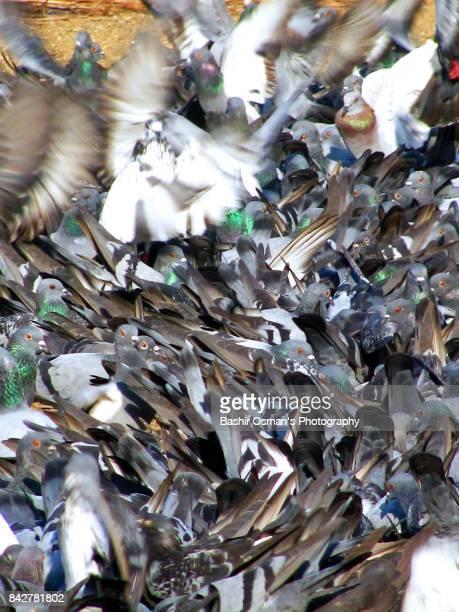 Pigeon feeding place