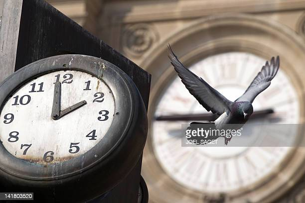 A pigeon flight passed clocks on March 24 2012 in Paris Europe moves to summer time at 0100 GMT on March 25 when clocks go forward an hour AFP...