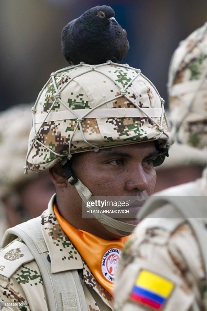 A pigeon lands on the helmet of a Colombian infantry soldier to be deployed as the Multinational Force and Observers (MFO) peacekeeping force in the Sinai peninsula during a military ceremony at Bolivar square in Bogota, Colombia, on April 03, 2013, to mark the 100th reshuffle of the MFO peacekeeping force overseeing the terms of the peace treaty between Egypt and Israel in the Sinai peninsula. AFP PHOTO/Eitan Abramovich /