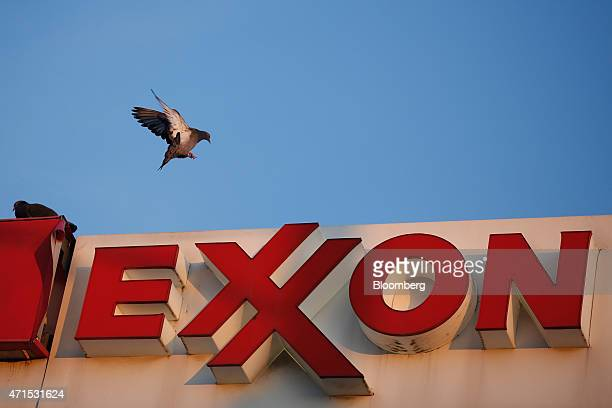 A pigeon lands on top of a sign at an Exxon Mobil Corp gas station in Richmond Kentucky US on Wednesday April 29 2015 Exxon Mobil Corp is scheduled...