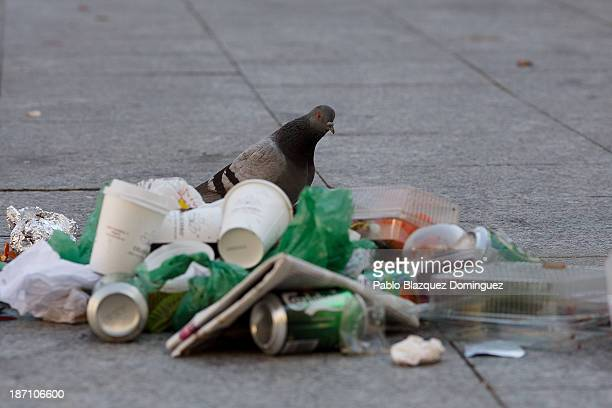 A pigeon looks for food in a pile of rubbish in the street on November 6 2013 in Madrid Spain Street cleaners garbage collectors and public park...