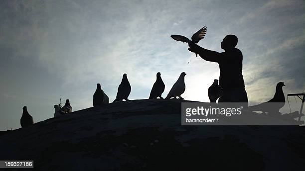 pigeon lover - releasing stock photos and pictures