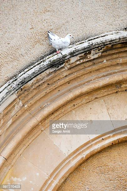 A pigeon on an arched window