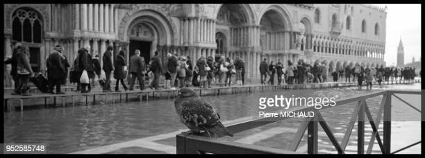 Pigeon passants marchant sur des passerelles lors d'inondations Place SaintMarc Venise Italie