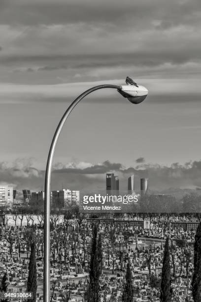 Pigeon perched on a lamppost