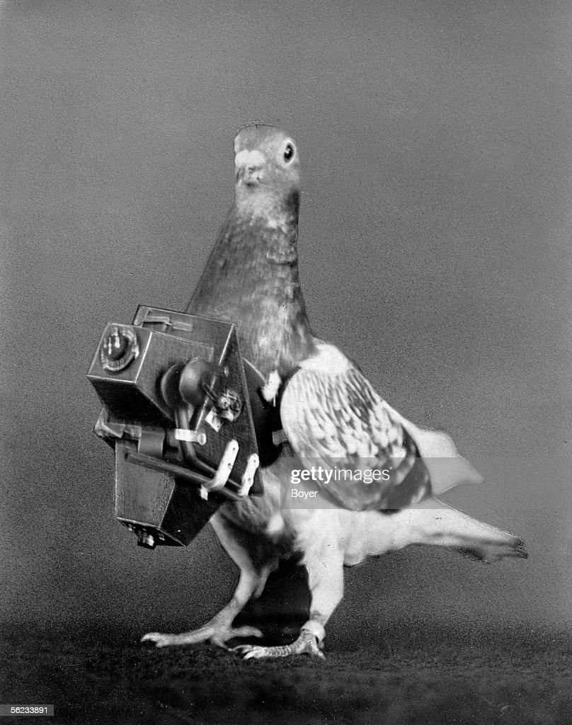 Pigeon photographer with his camera. France, about : News Photo