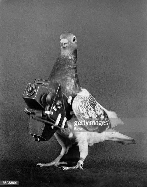 Pigeon photographer with his camera France about 1910 BOY2639