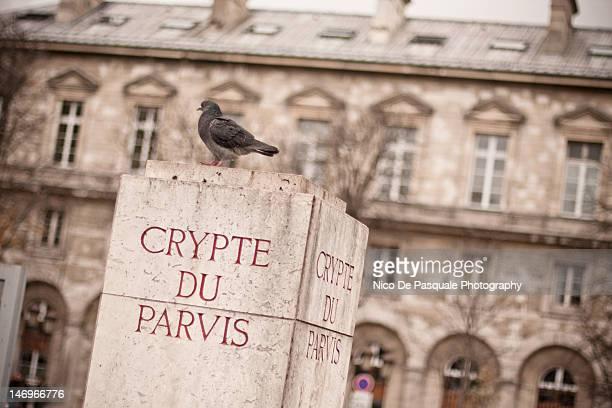 pigeon - クリプト ストックフォトと画像