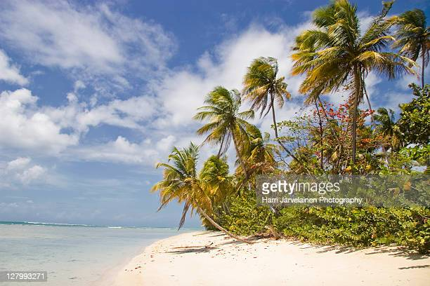 pigeon point beach in tobago - tobago stock pictures, royalty-free photos & images