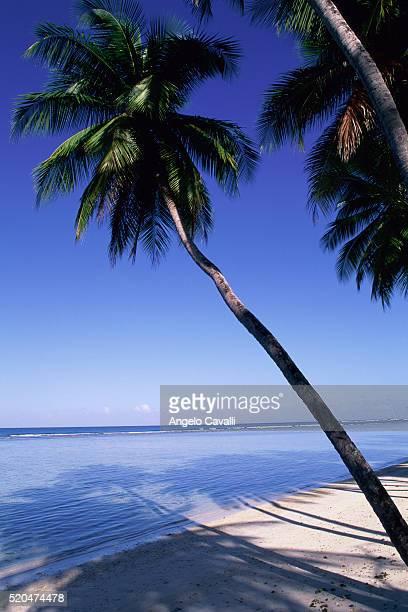 pigeon point, tobago, trinidad and tobago, caribbean - paisajes de trinidad tobago fotografías e imágenes de stock