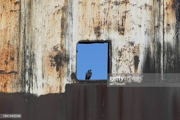 Pigeon sits in a window among the rubble from the Gibbon Wilputte Coal bunker following the demolition of the Dorman Long Tower at Southbank on the...