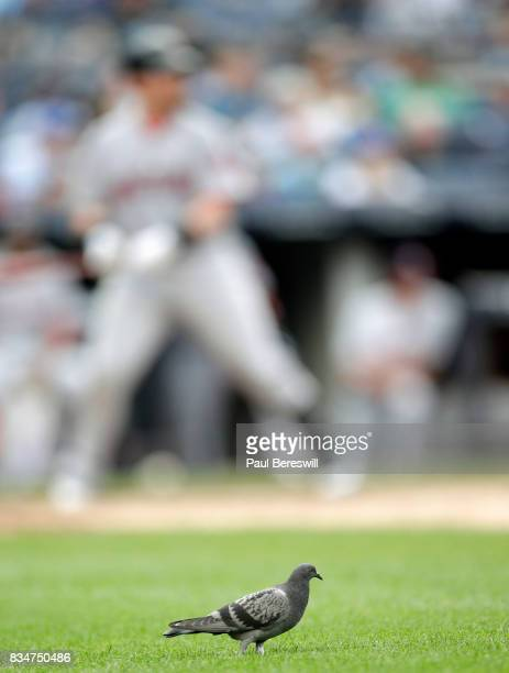 A pigeon strolls on the grass just outside the first base line as Christian Vazquez of the Boston Red Sox sets to bat in an MLB baseball game against...