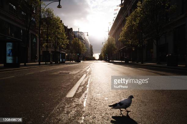 Pigeon walks across a deserted Oxford Street in London, England, on March 28, 2020. The UK today began its first weekend under the covid-19...