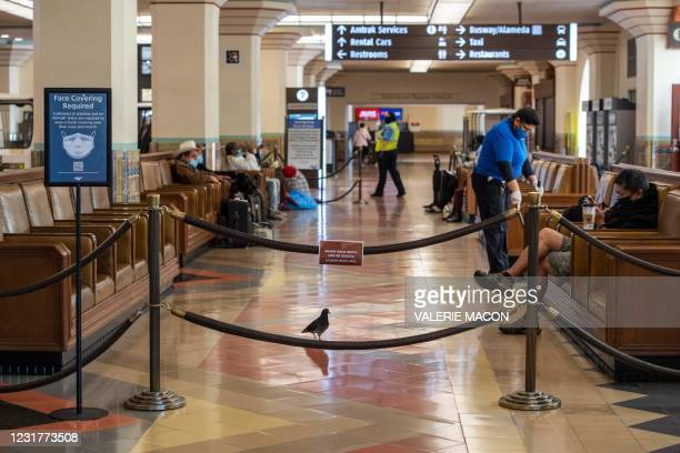 Pigeon wanders in the waiting area of the Union Station, downtown L.A. Where part of the Oscars Ceremony will take place Sunday, April 25, in Los...