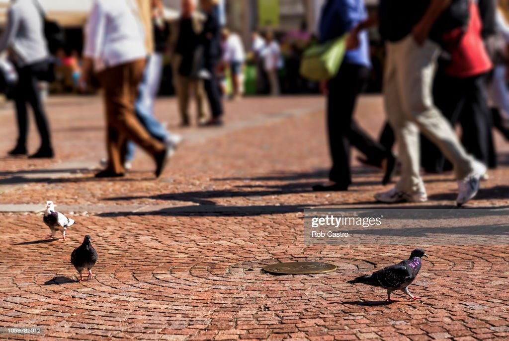 Pigeons and People on the Street : Stock Photo