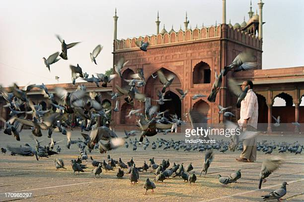 Pigeons and the Jama Masjid Delhi India