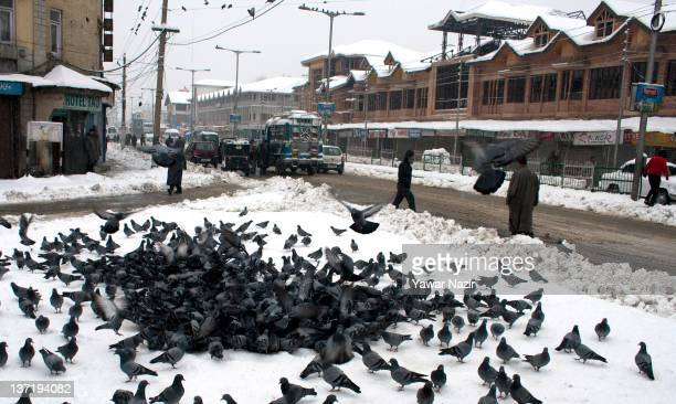 60 Top Extreme Winter Weather In Kashmir Pictures, Photos