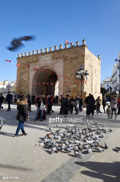 Pigeons at 'Bab el Bhar', harbor gate, Porte de France