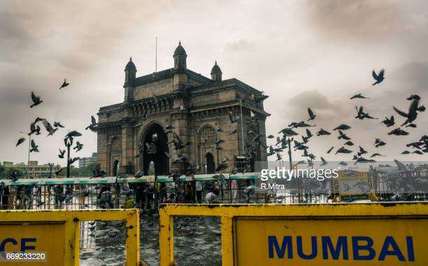 Pigeons at Gateway of India, Mumbai