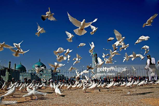 Pigeons at the Blue Mosque in central Mazar O E O Sharif in Balkh province Afghanistan March 20 2006