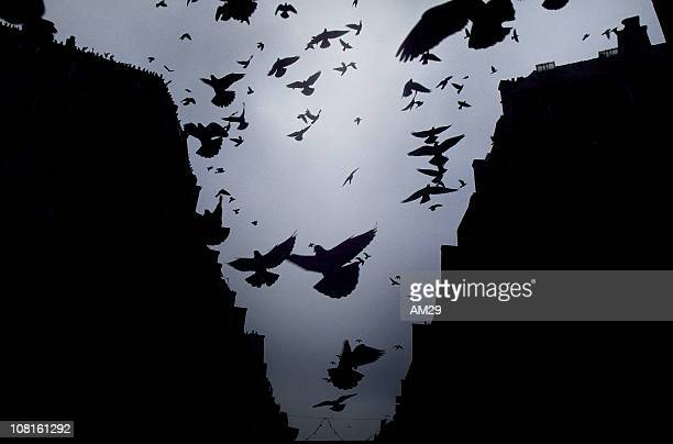 pigeons birds flying in paris - ominous stock photos and pictures