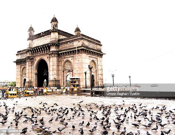Pigeons By Gateway To India In City