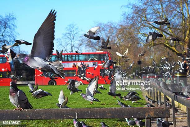 Pigeons By Railing At Park