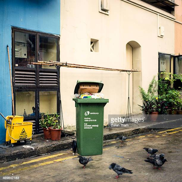 Pigeons congregate near shelter and sources of food in a back alley in Singapore.