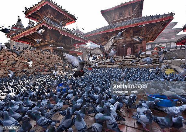 Pigeons flock a feeding point in Kathmandu Durbar Square complex, on May 2, 2015 in Kathmandu, Nepal. At least 1.7 million children were affected by...