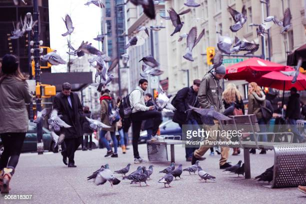 CONTENT] Pigeons flock back and forth at the corner of West Georgia and Granville street in Vancouver