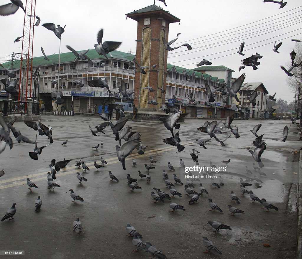 Pigeons flock during curfew in entire valley to thwart the 'Eid-Gah challo' call given by separatist's parties on February 15, 2013 in Srinagar, India. Most of the valley is reeling under strict curfew and all roads coming to summer capital has been blocked with concertina wires and road blockades.