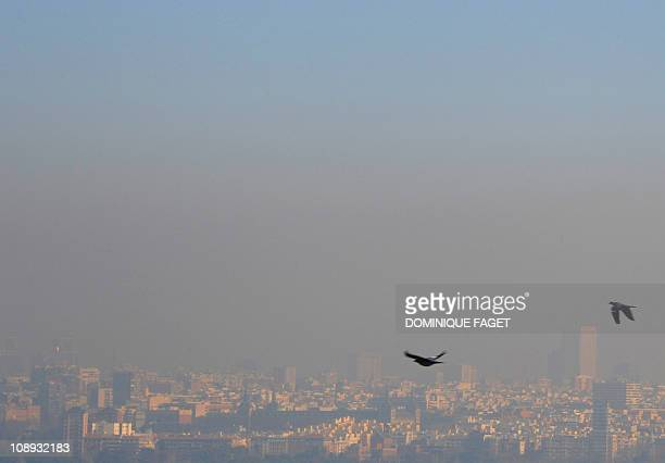 Pigeons fly above Casa de Campo park on February 9 2011 as pollution covers the sky of Madrid The cities of Madrid and Barcelona have moved to curb...