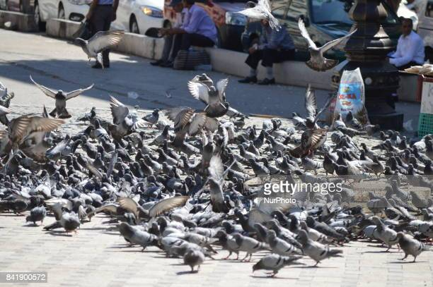 Pigeons fly around people as people enjoy their holiday by visiting the Haci Bayrami Veli Mosque and its around on the second day of Muslims'...