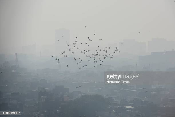 Pigeons fly as the city landscape is seen shrouded in smog on November 9 2019 in New Delhi India
