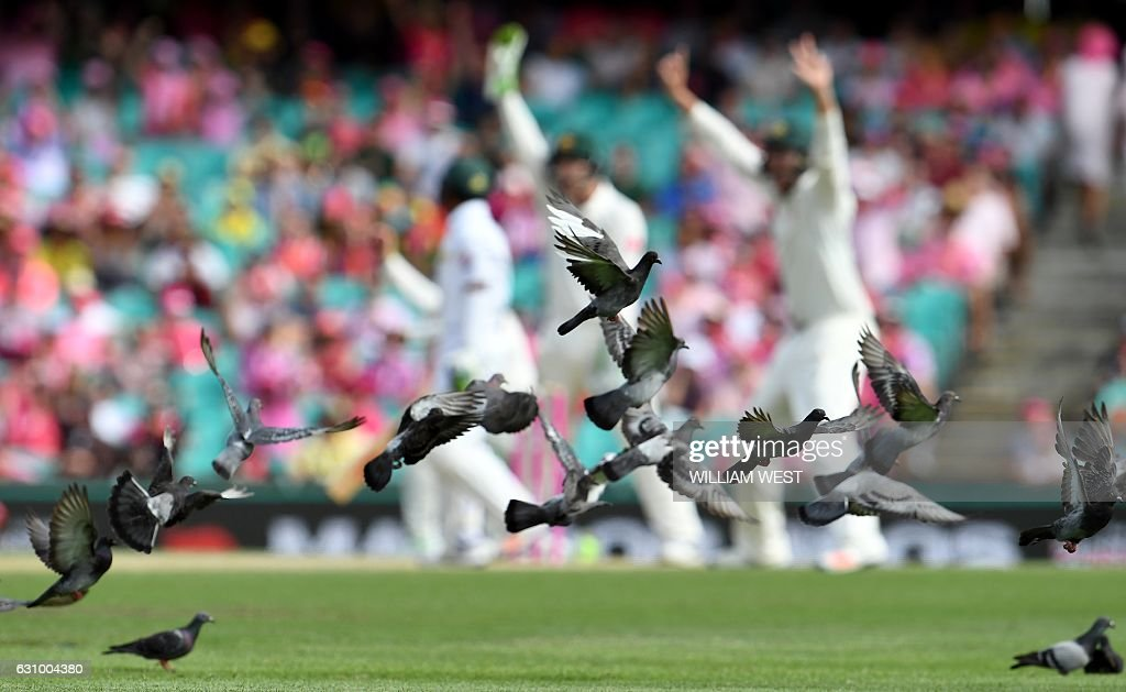 TOPSHOT - Pigeons fly away as Australia appeal for a decision against the Pakistan batsman during the third day of the third cricket Test match at the SCG in Sydney on January 5, 2017. / AFP / WILLIAM