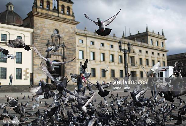 Pigeons fly in Bolivar Square after Colombia's President Juan Manuel Santos cast his ballot there in the referendum on a peace accord to end the...