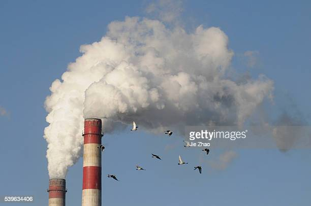 Pigeons fly near spewing stacks of a heat power plant in Changzhi Shanxi province December 21 2009 UN climate talks ended with a bareminimum...