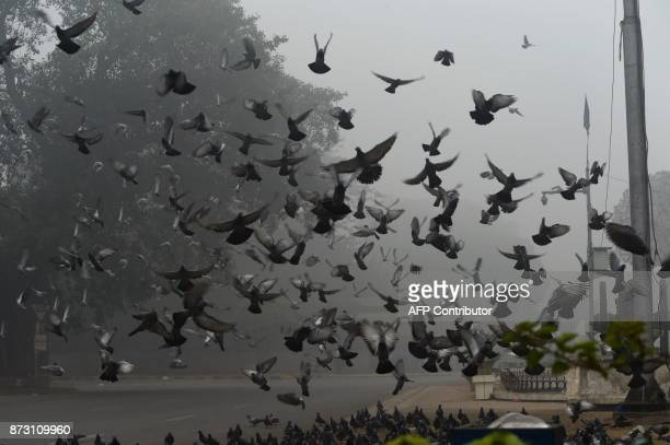 Pigeons fly on a street amid heavy smog in Lahore on November 12 2017 Large swathes of Pakistan and north India see a spike in pollution at the onset...