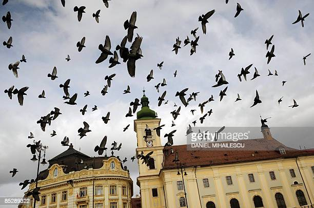 Pigeons fly over the historical centre of Sibiu city on March 7 2009 AFP PHOTO DANIEL MIHAILESCU