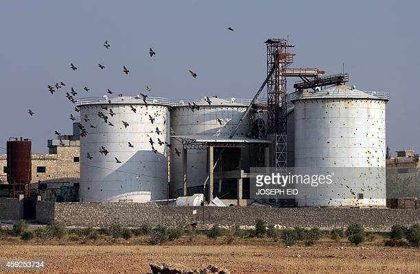 Pigeons fly past a destroyed factory in Aleppo's industrial area in the government controlled side of the wartorn northern Syrian city on November 18...