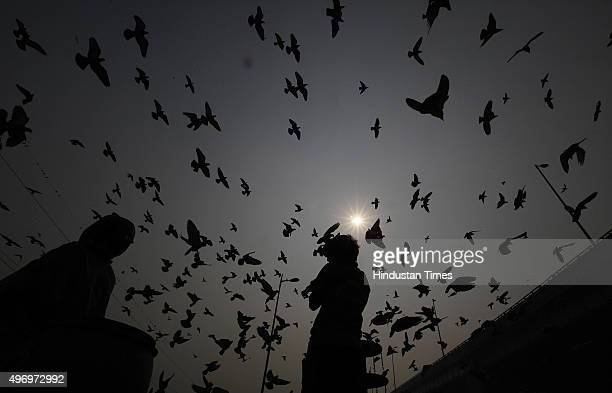 Pigeons fly past on a smoggy morning on November 13 2015 in New Delhi India Pollution soared to hazardous levels in Delhi on the night of Diwali...