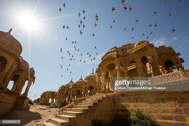 Pigeons flying above Bada Bagh, Jaisalmer, Rajasthan, India